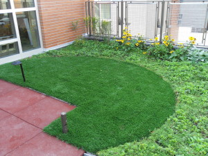green roofs3