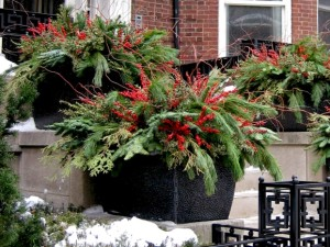 Winter color containers