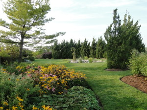 lawn and planting beds