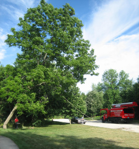 tree diagnosis and treatment
