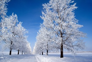winter snow tree lined road