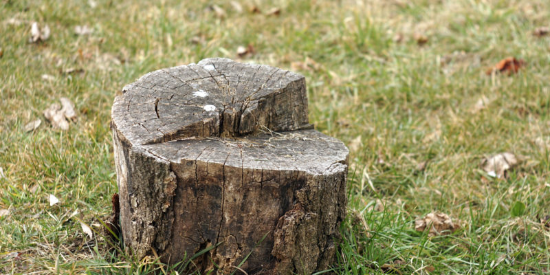 Why You Should Leave Stump Grinder Operation to the Experts