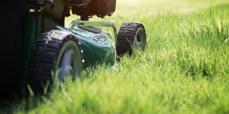 Summer Lawn Care Tips for Keeping Your Grass Green in Milwaukee