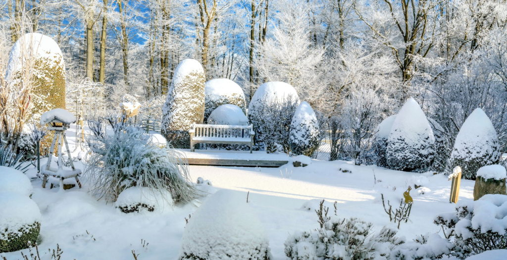 frosted over winterized garden