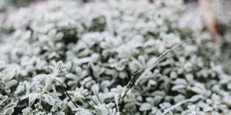 How to Choose the Best Cold Climate Plants for Milwaukee Gardens