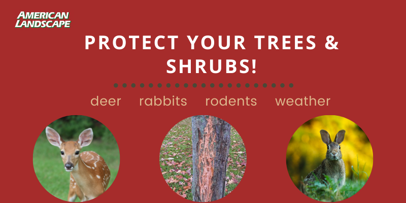 Protect Your Trees & Shrubs Against Winter Damage