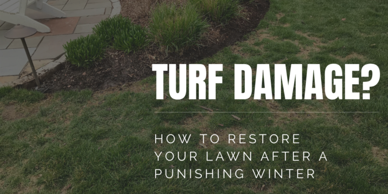 Spotting and Treating Turf Damage from Winter
