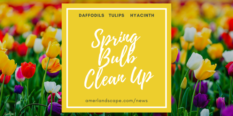 Spring Bulb Clean-Up